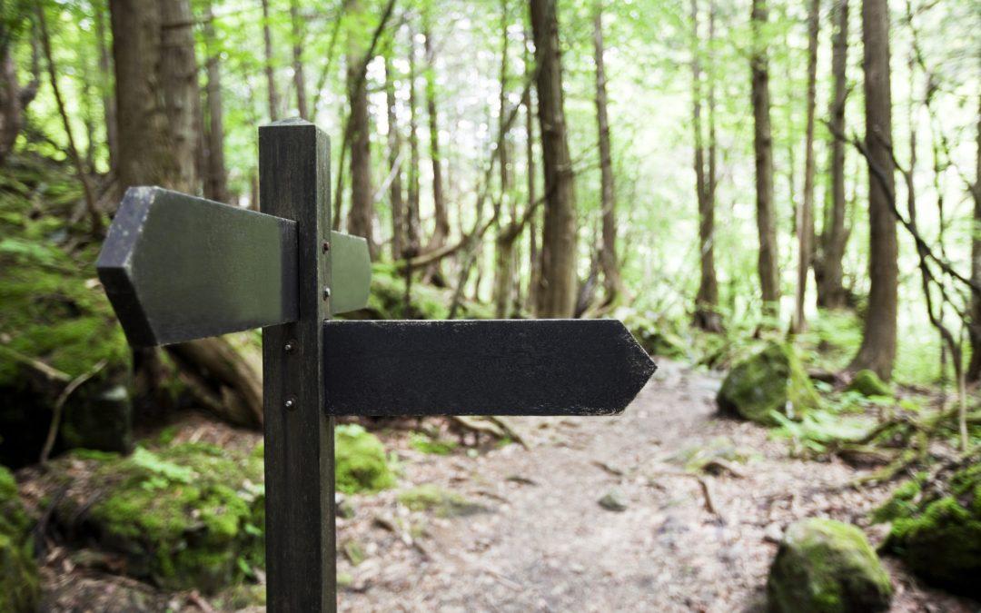 Vila Nova de Famalicão dinamiza Rota da Floresta do Vale do Este